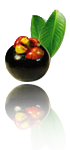 mangosteen-icon